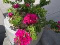 Una de las flores en el área de la plaza de Eugenio María de Hostos
