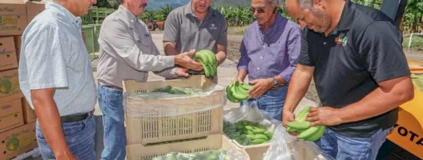 Anuncian Programas de Alivio para Agricultores ante Emergencia del COVID-19